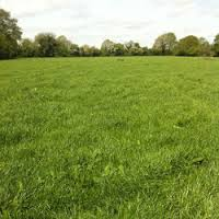 Agricultural Land of 25 Hectare for sale